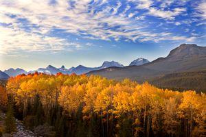 Aspen Grove in the Morning, Northern Jasper National Park, Alberta, Canada