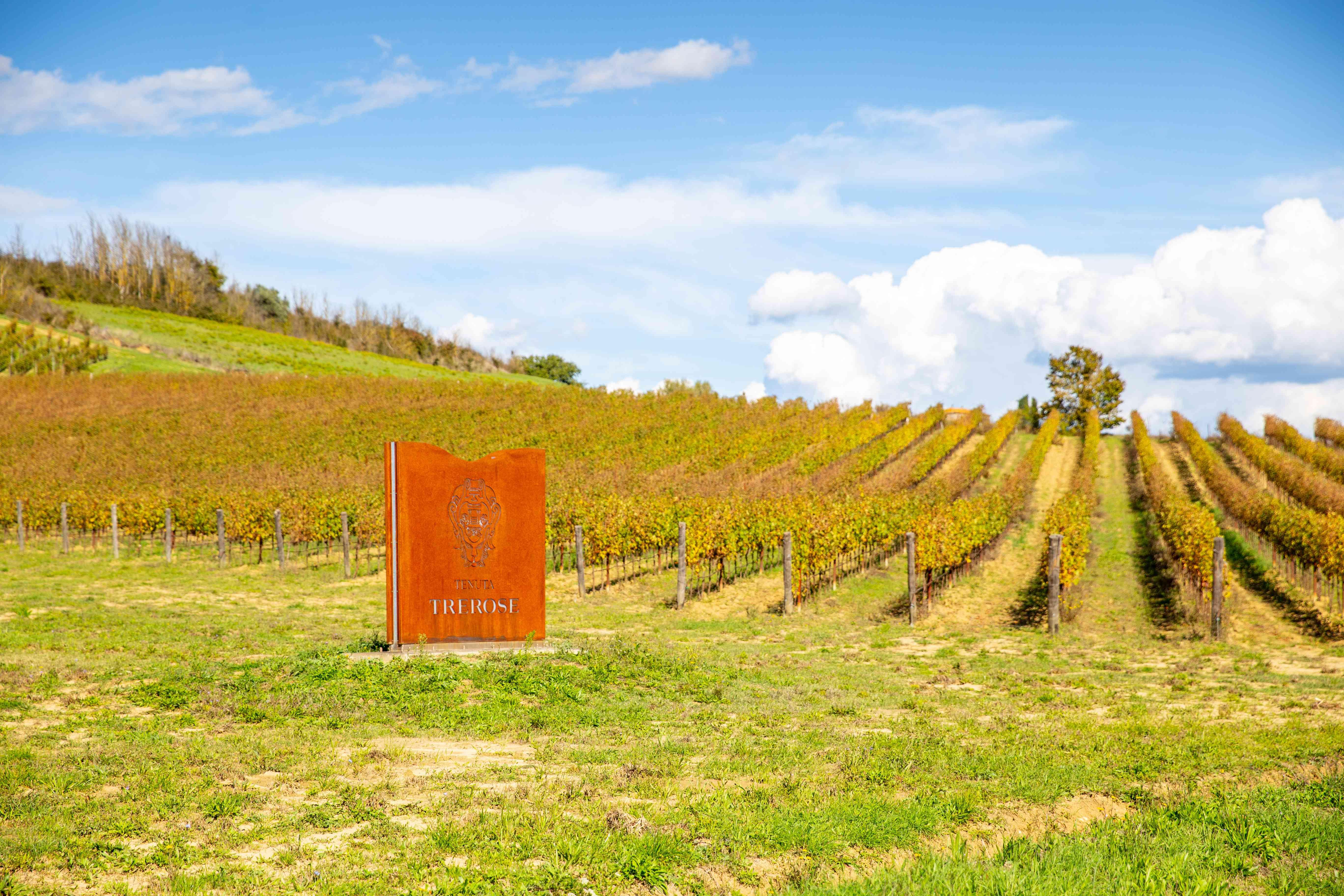 A vineyard in the Chianti region of Tuscany