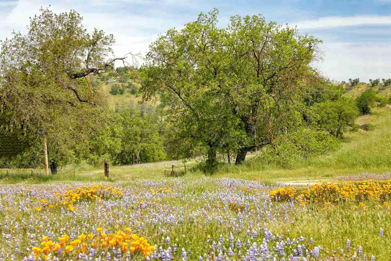 Primavera en el valle de los robles