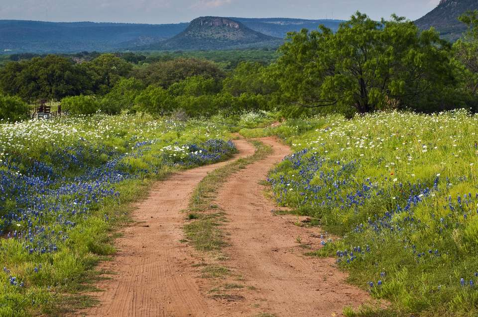 Wildflowers along a dirt road in Texas Hill Country