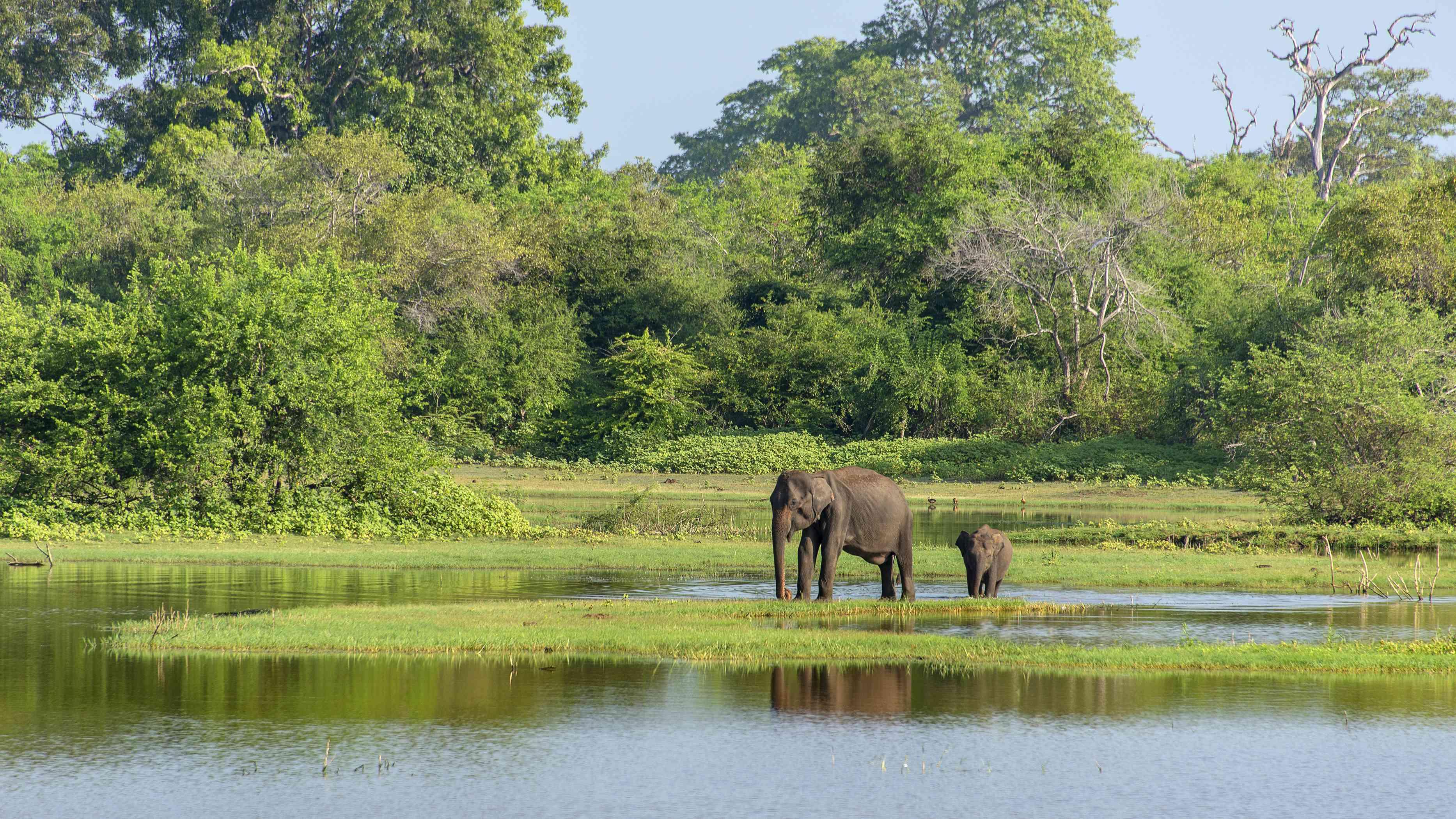 Big and baby elephants in Yala National Park, Sri Lanka