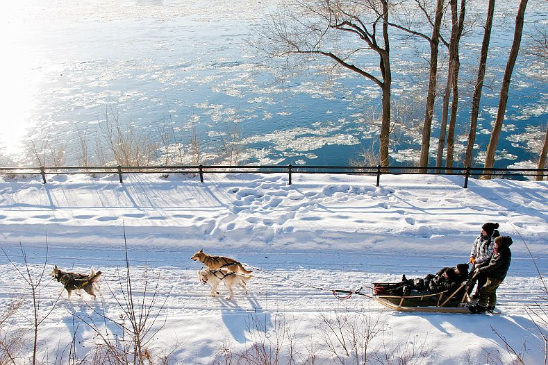 Montreal dog sledding