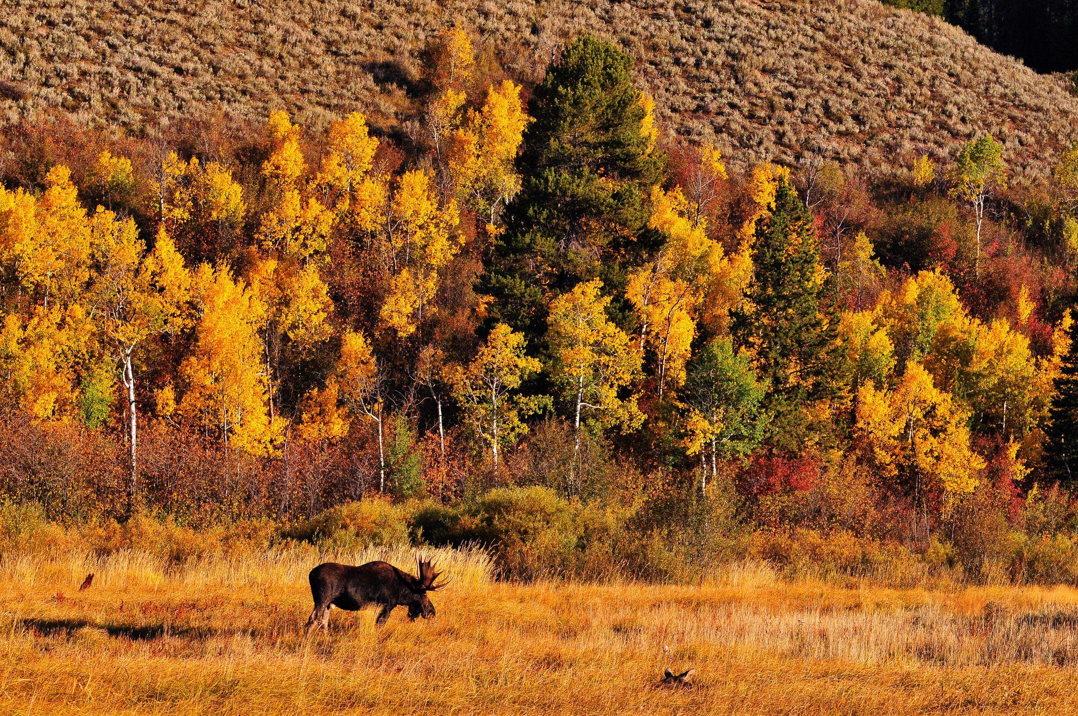 Wyoming in Autumn