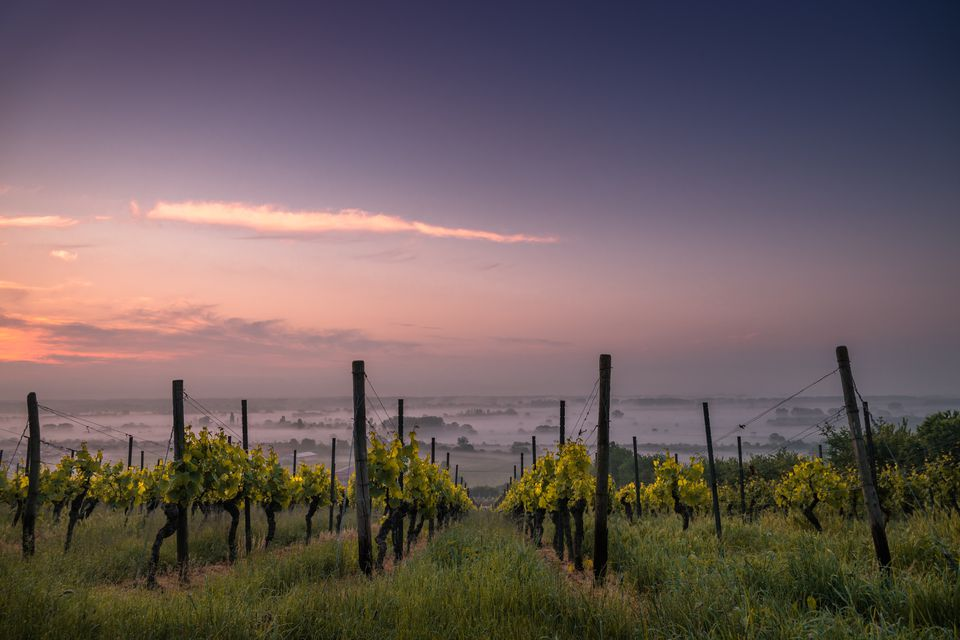 A French vineyard