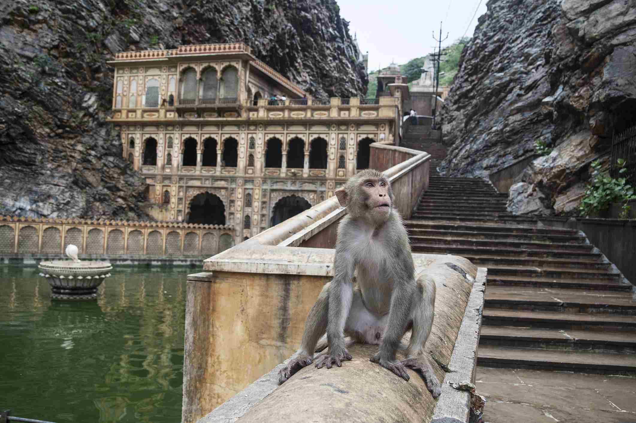 Galtaji Temple, Jaipur.