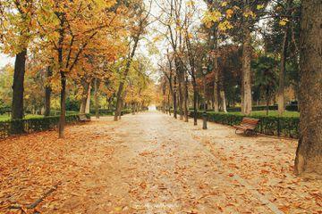 An autumn day in Retiro Park in Madrid, Spain