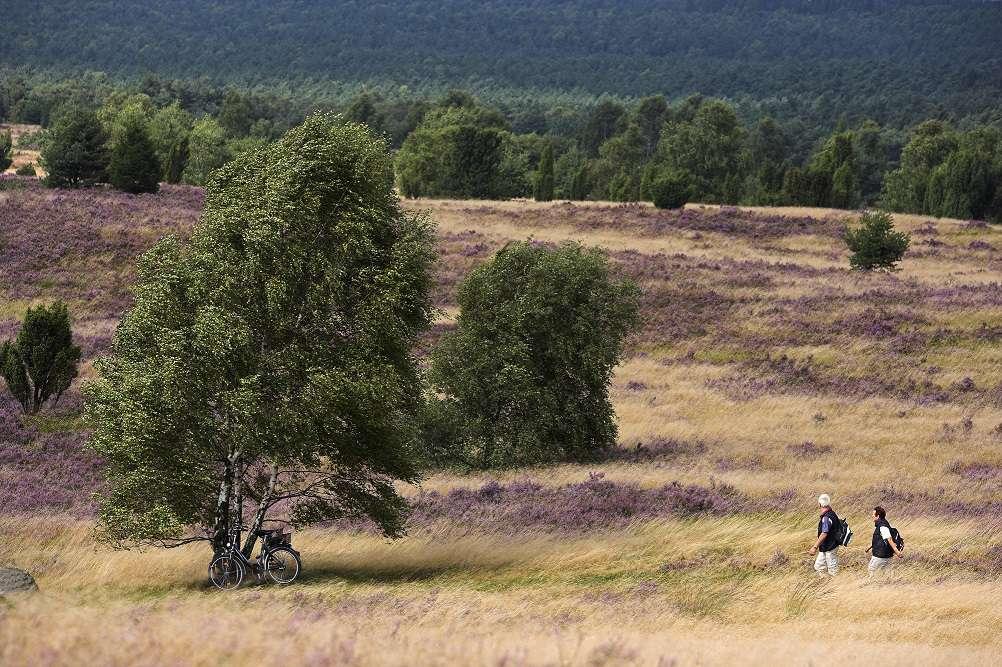 Lueneburger Heide in Lower Saxony, Germany.