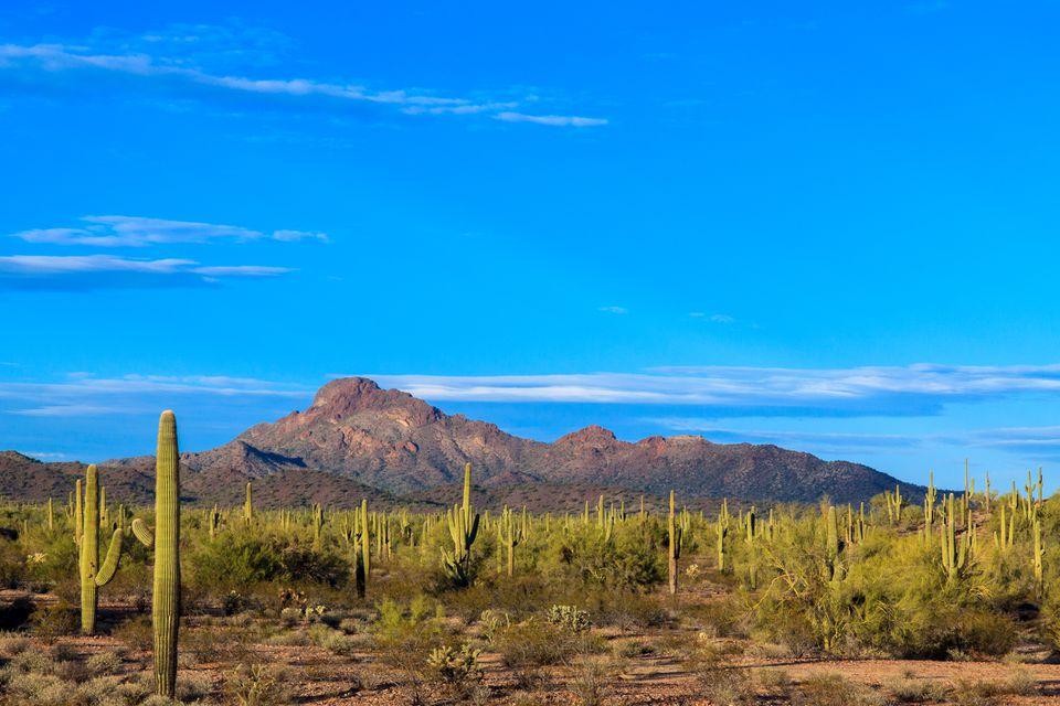Arizona's Sonoran desert at dusk