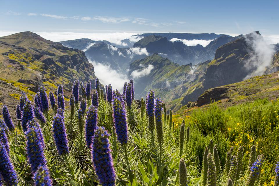 Pride of Madeira at Pico de Arieiro