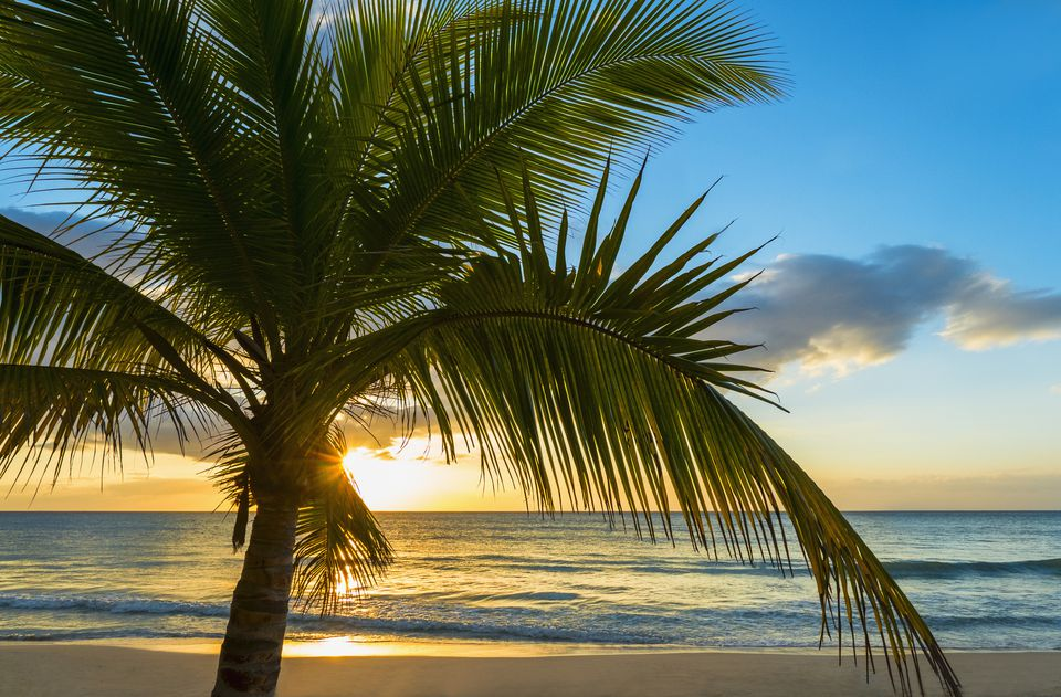 Jamaica, palm tree at sunset