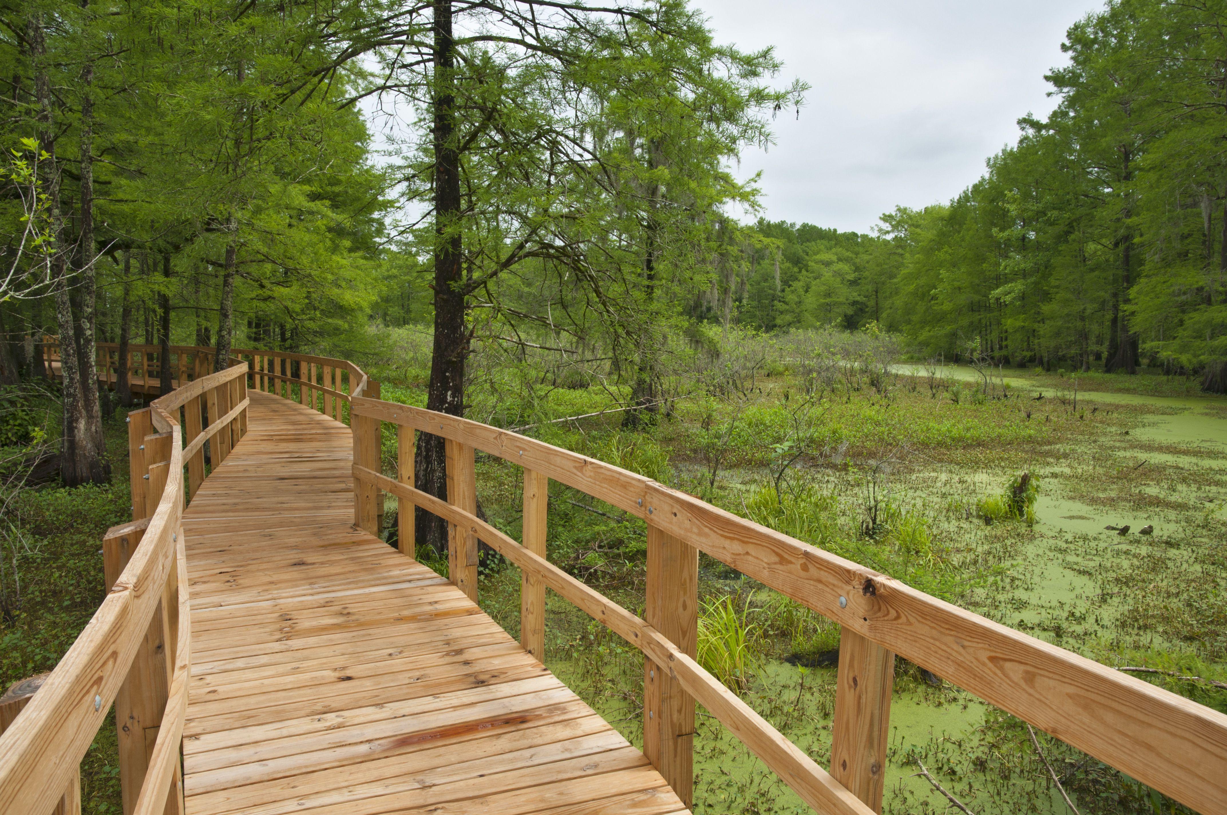 Wooden walkway into wetland at Lake Martin Cypress Island Preserve.