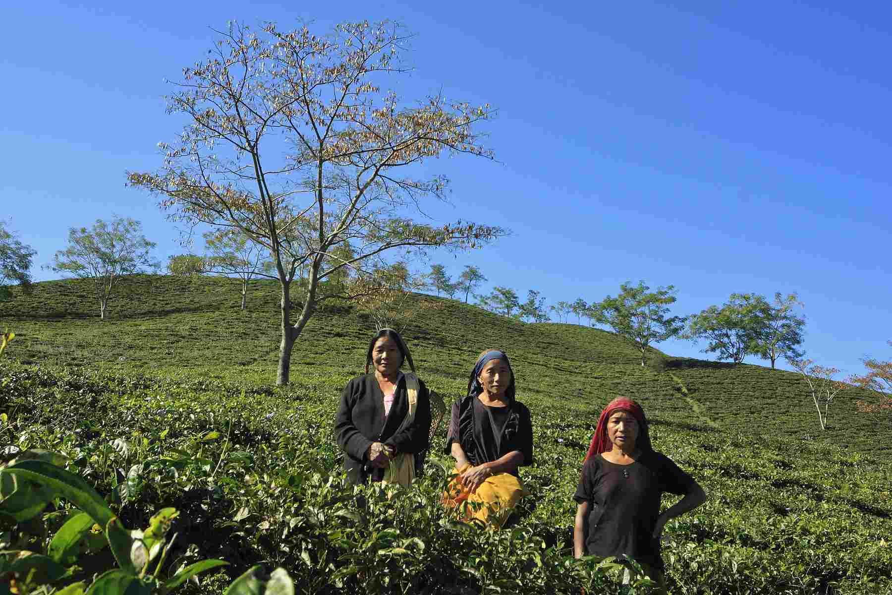 Konyak Tea Retreat