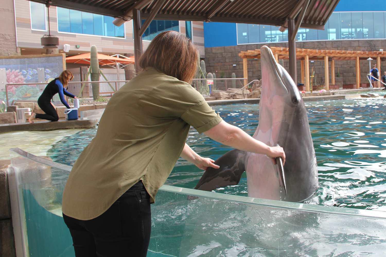 Swim with Dolphins at Dolphinaris Arizona
