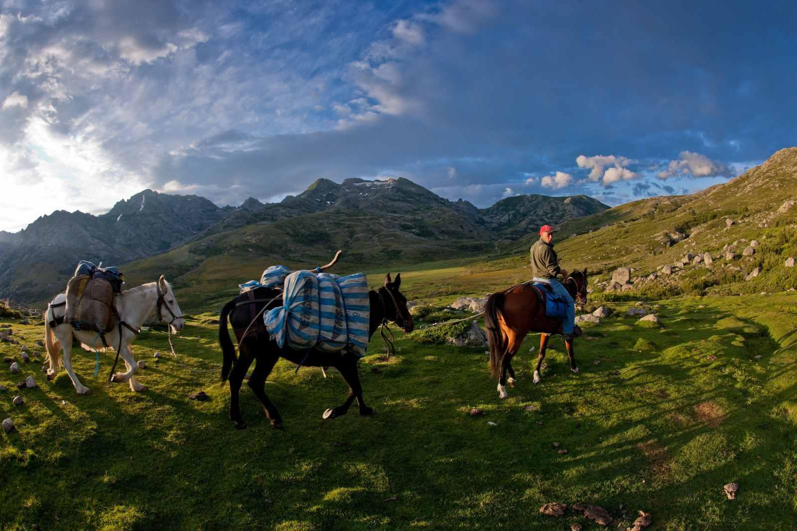 Caballos siguiendo el camino hacia el corral Vaccaghja en el corazón de las montañas de Córcega
