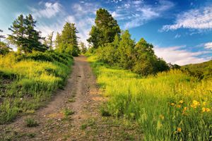 A trail in Steamboat Springs