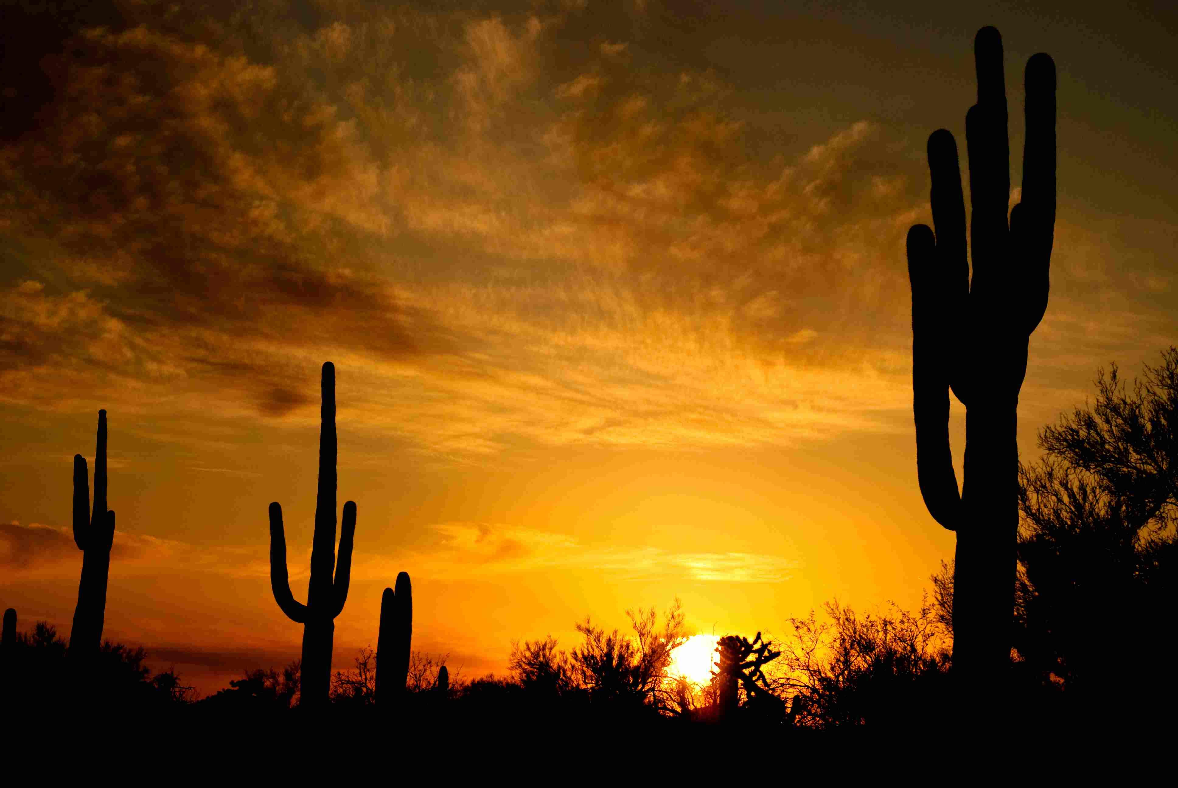 Cactus Saguaro durante el atardecer en Arizona