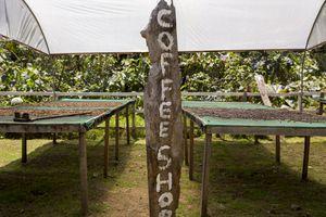 Coffee at Poas Volcano