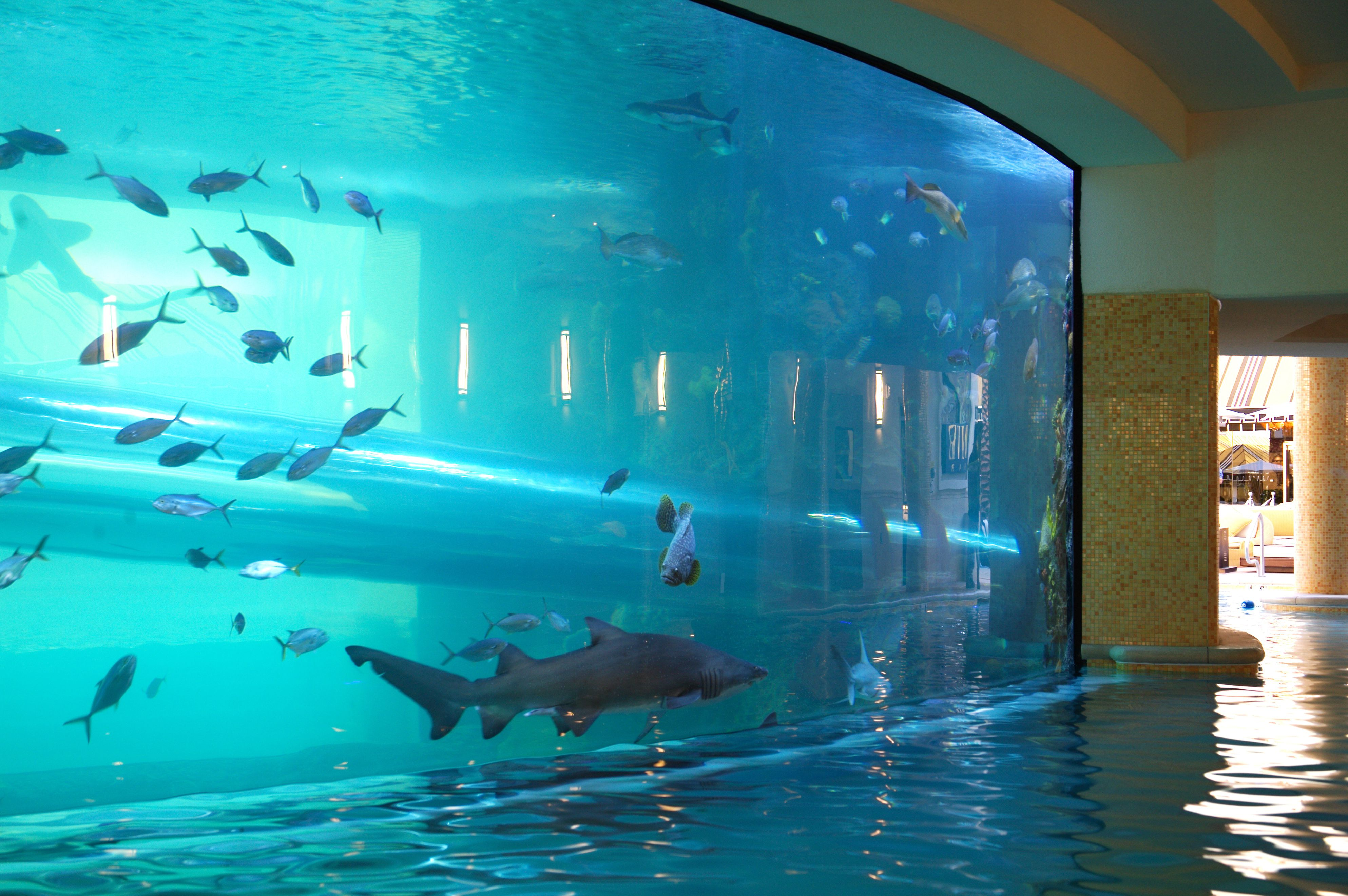 Pool at the Golden Nugget with an aquarium along one side