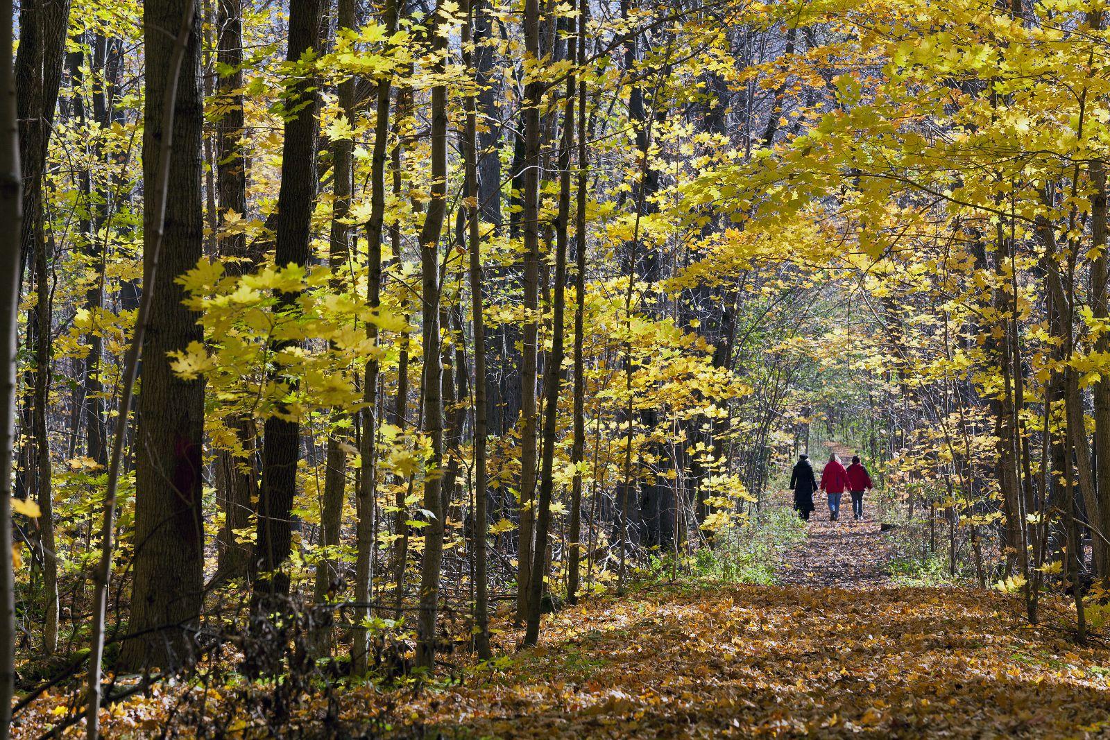 Parc Bois-de-Liesse hiking trail in the fall