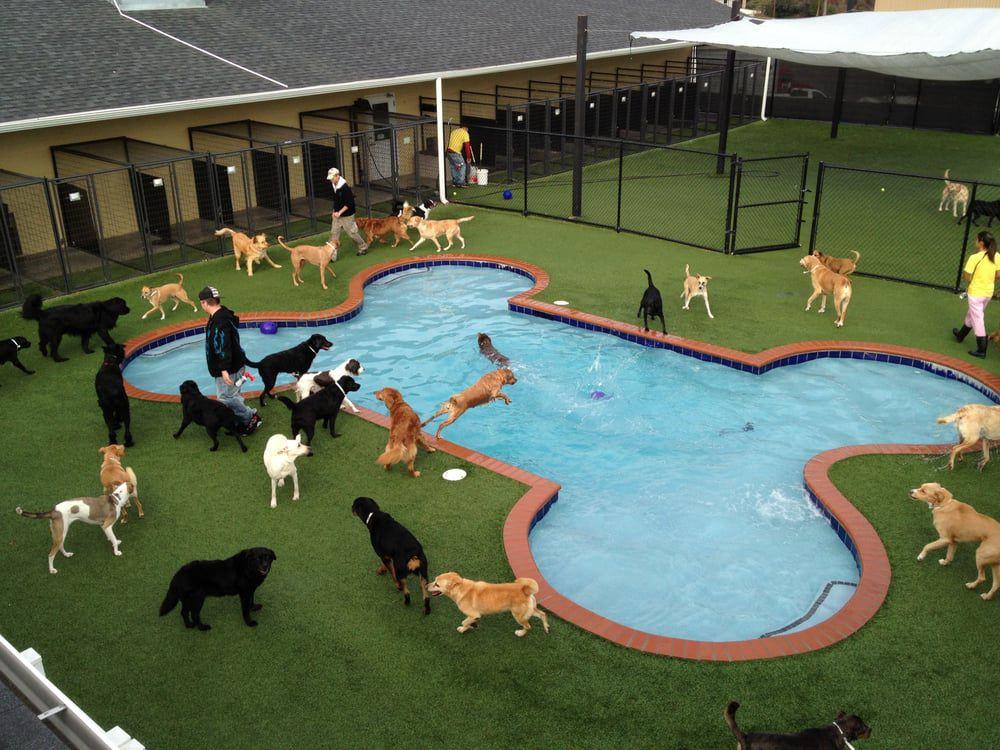 Perros en una piscina con forma de hueso