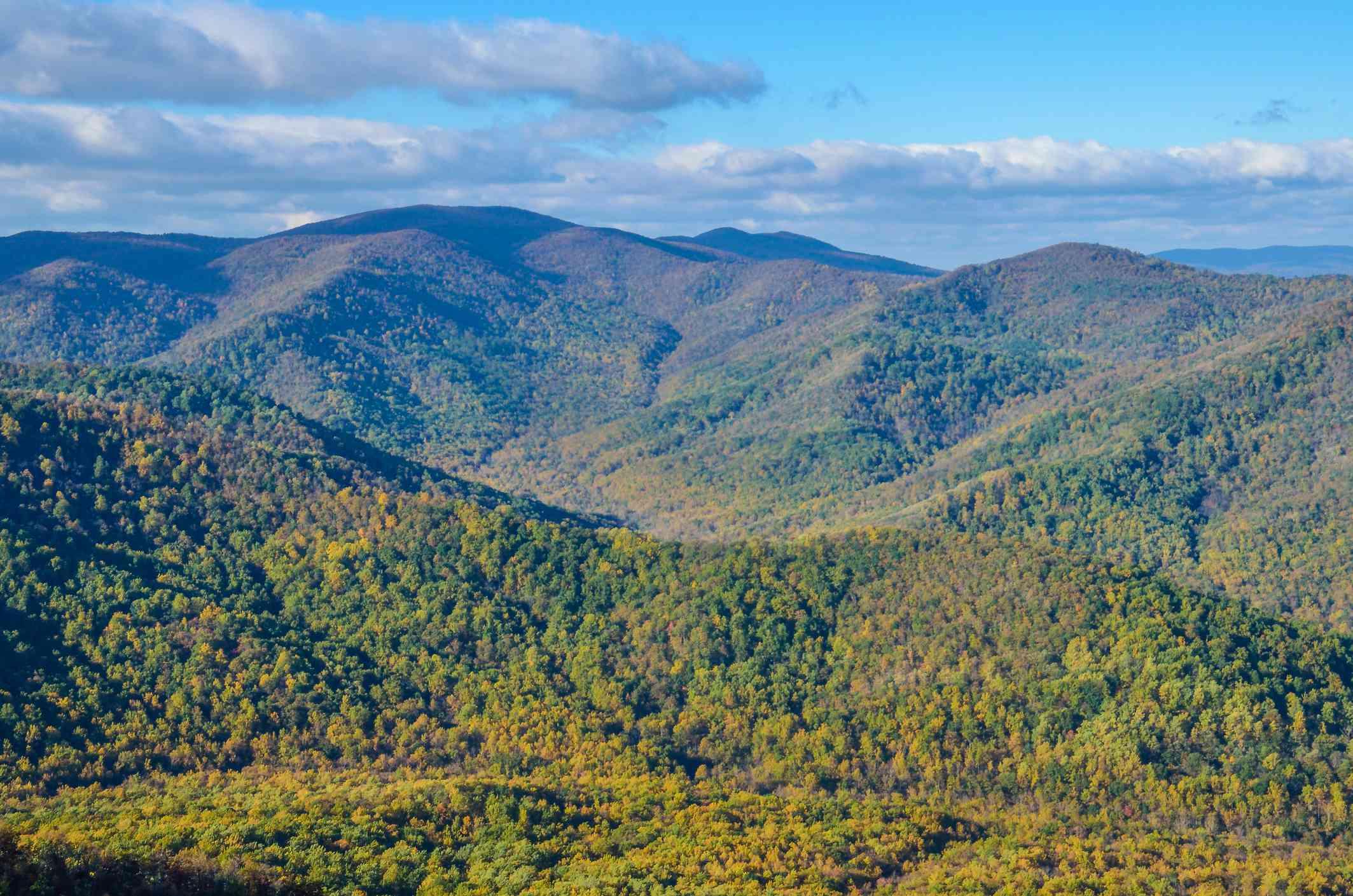 Vista a la antigua montaña de trapo en Shenandoah, Virginia, con follaje amarillo y dorado en los bosques