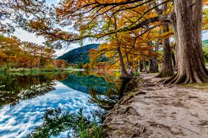 Beautiful Bright Orange Fall Foliage on Cypress Trees Surrounding the Clear Frio River, Texas.