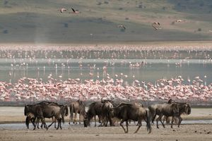 Tanzania Travel Guide Essential Facts and Information