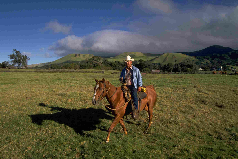 Parker Ranch, Kohala, Hawaii