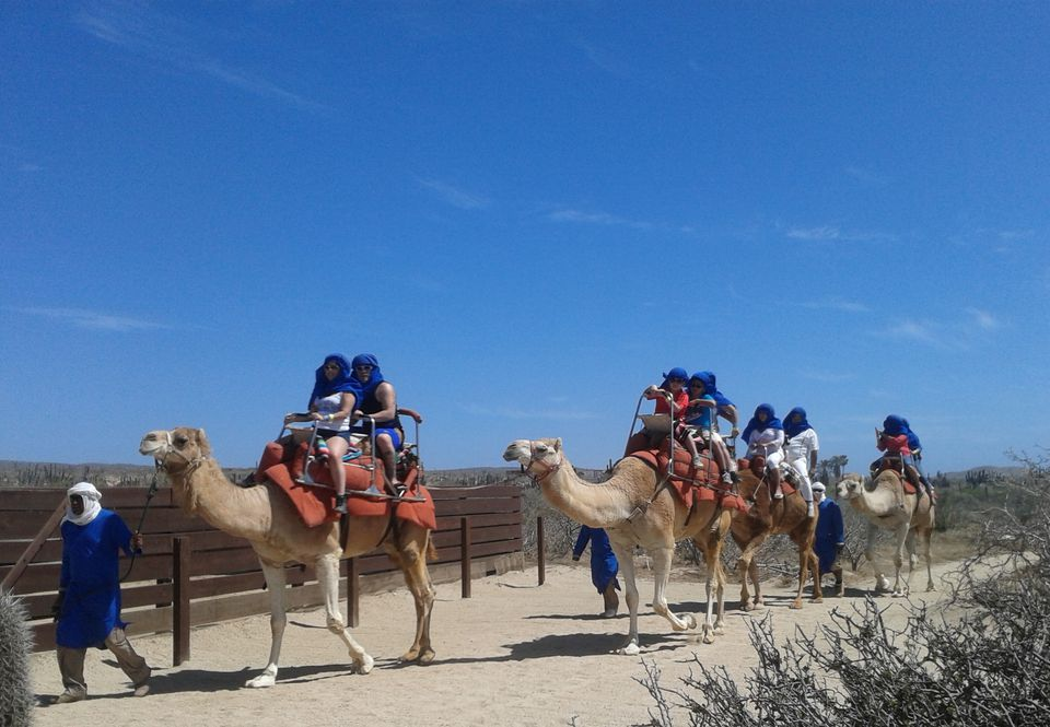 Riding camels in Los Cabos