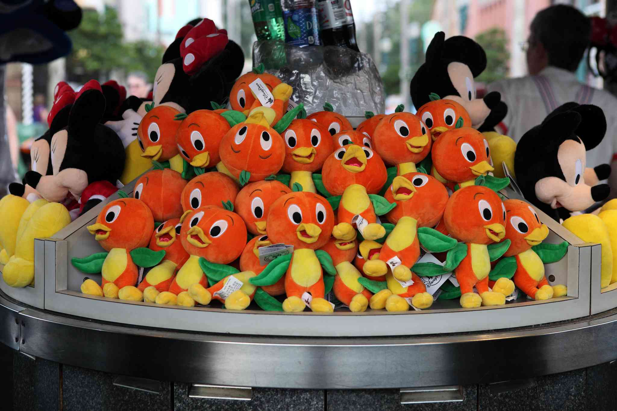 Orange bird plushies, Hollywood Studios