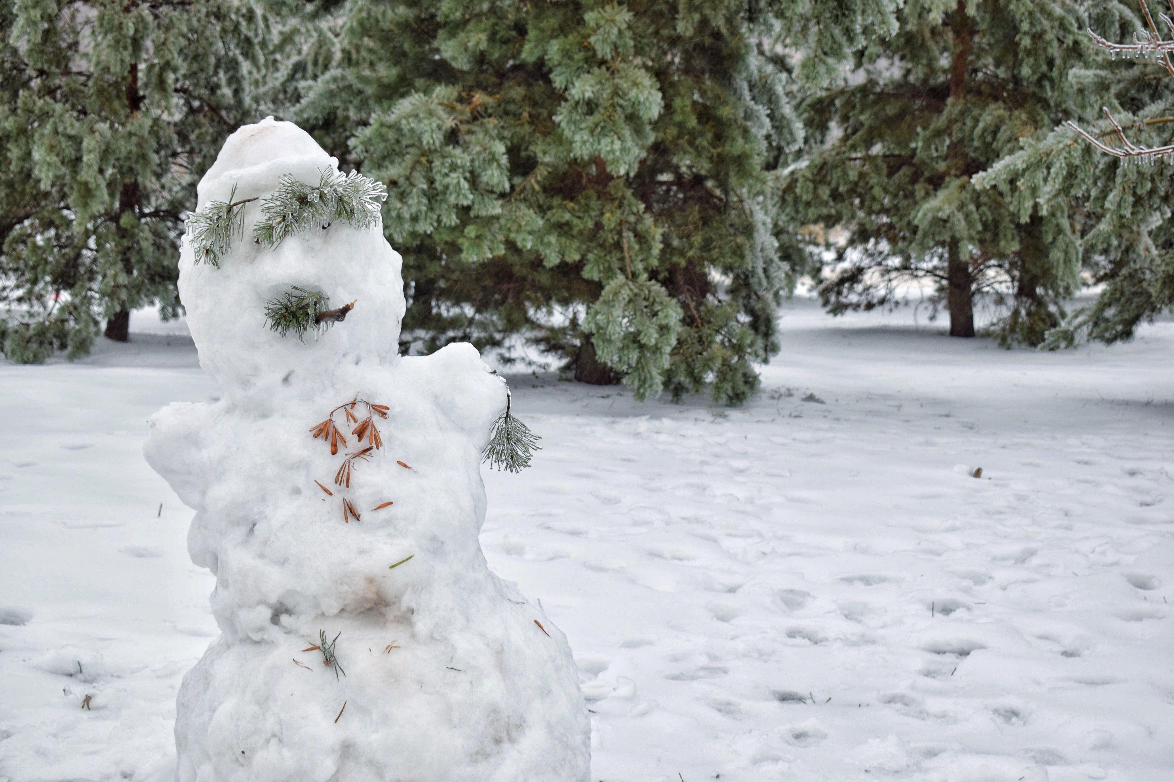 Nahaufnahme des Schnees auf Baum während des Winters