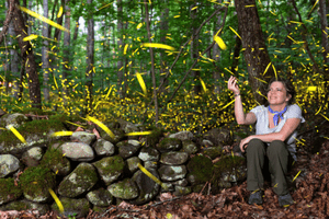 Great Smoky Mountains Firefly Event