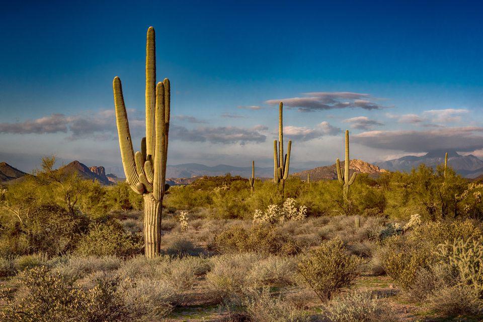 Car Rentals Phoenix Arizona Budget