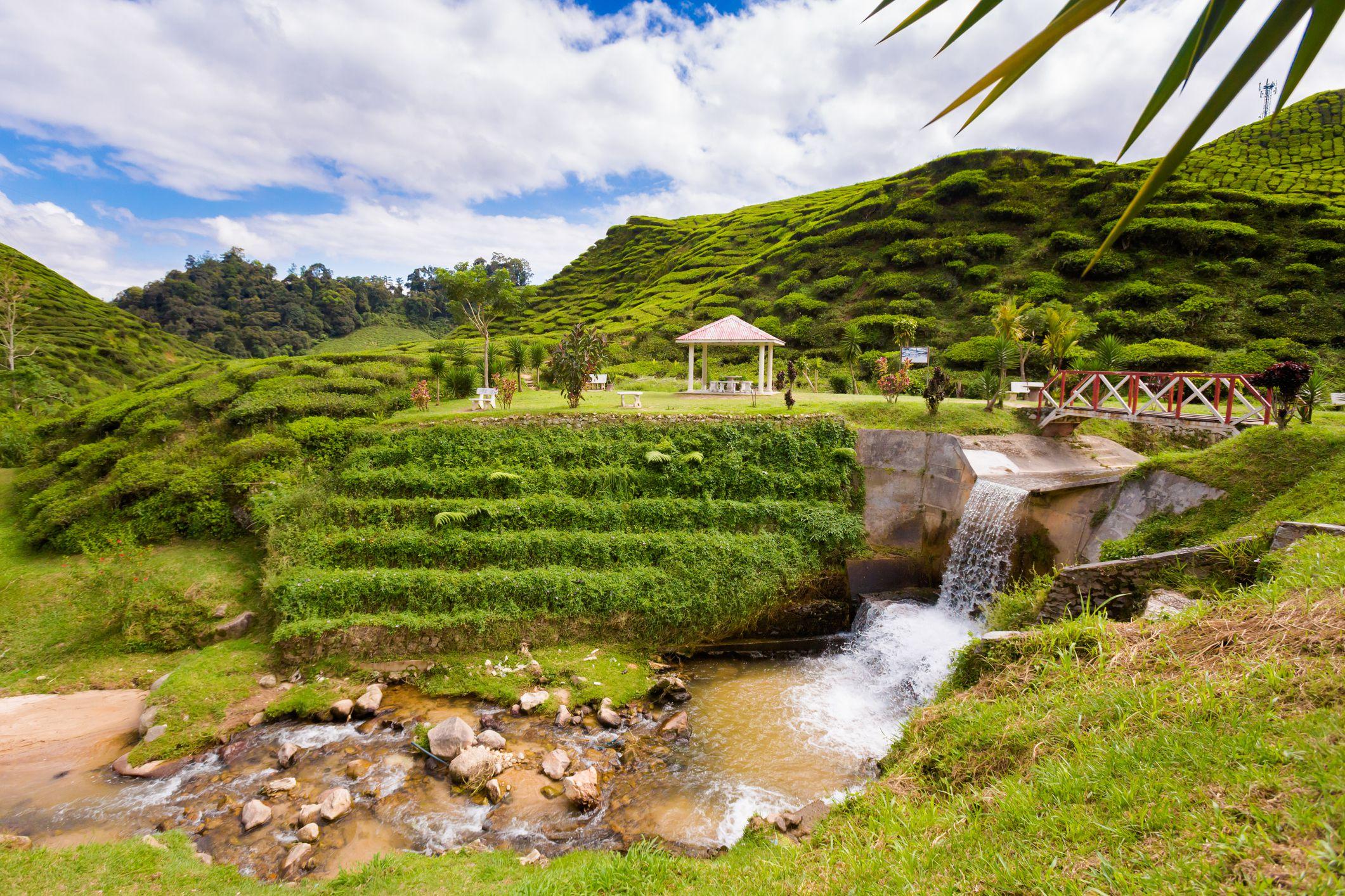 Tea Stream Valley