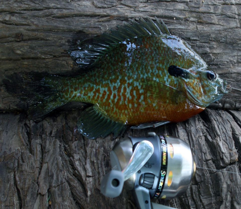 panfish-reel.jpg