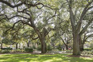 USA, Georgia, Savannah, a square in the city