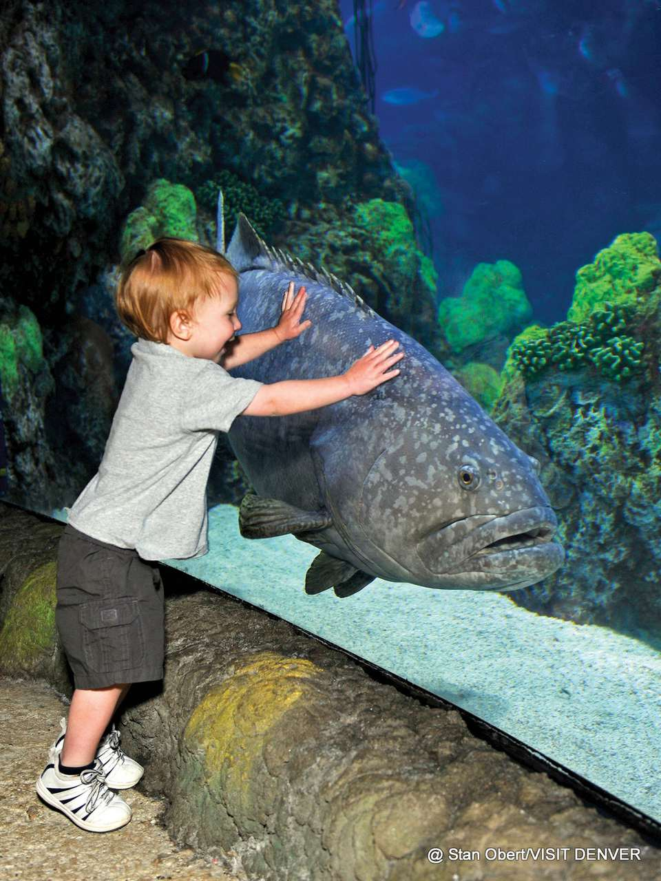 1-Downtown-Denver-Aquarium.jpg