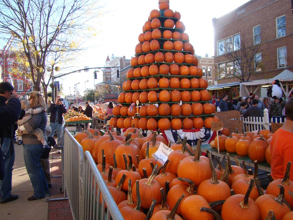 pumpkins on display at the Circleville Pumpkin Show