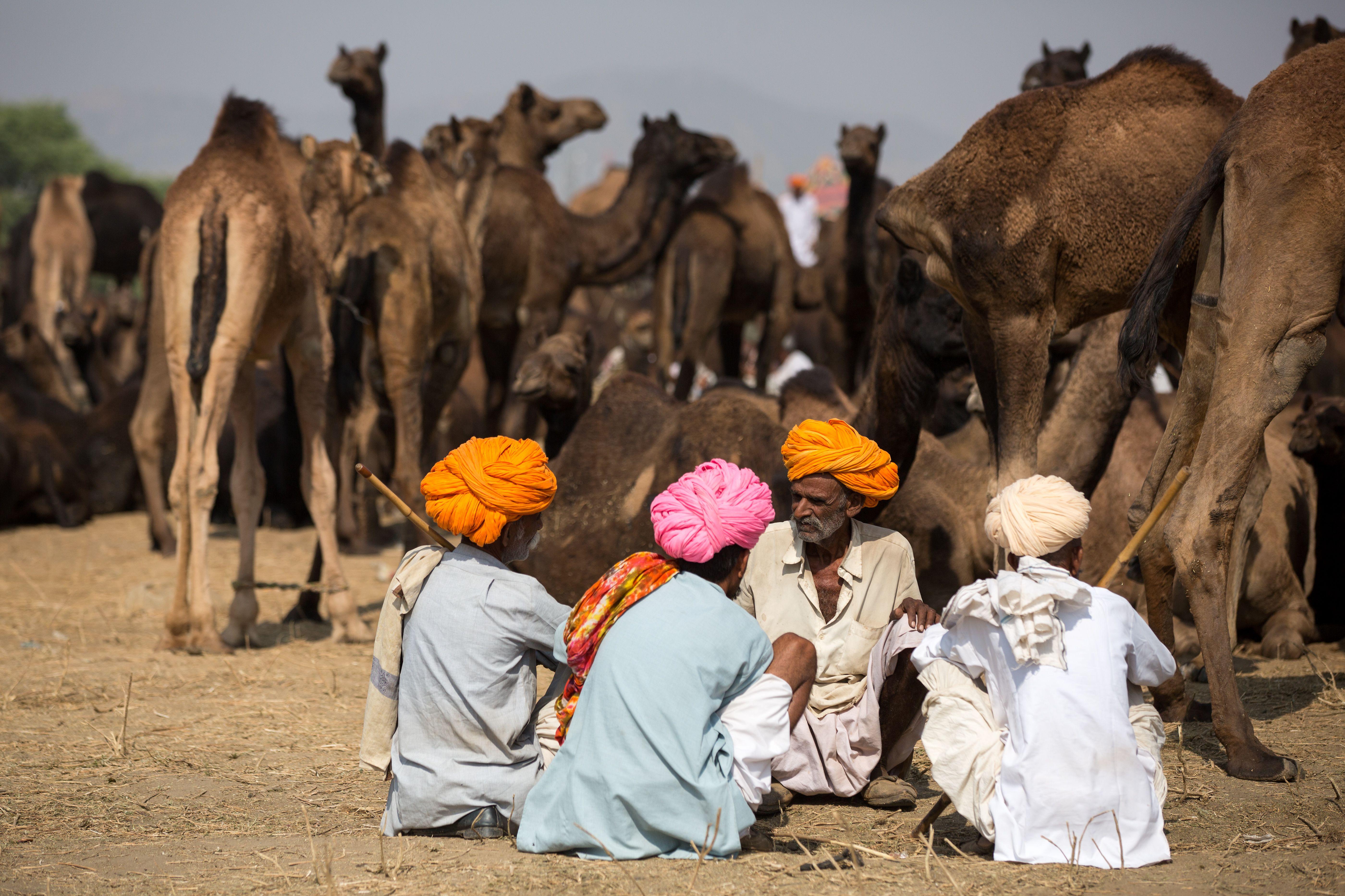 Pushkar camel Fair Rajasthan India