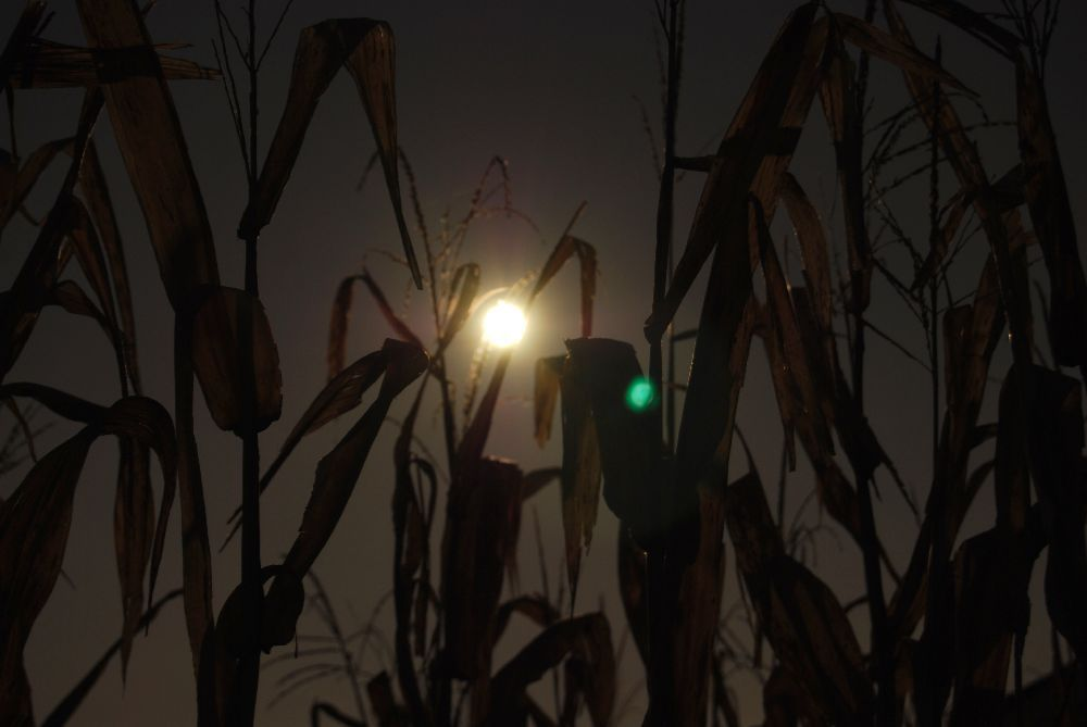 Fields of Fear at night
