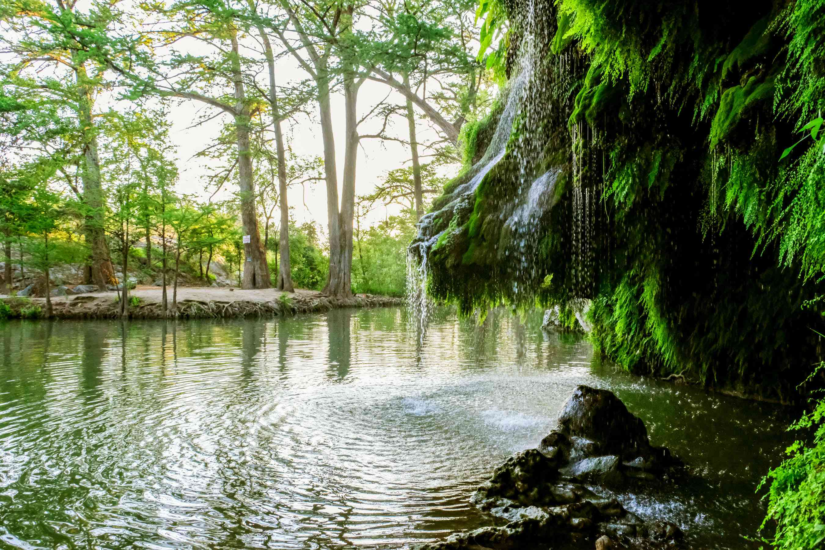Water falling off plants into Krause Springs