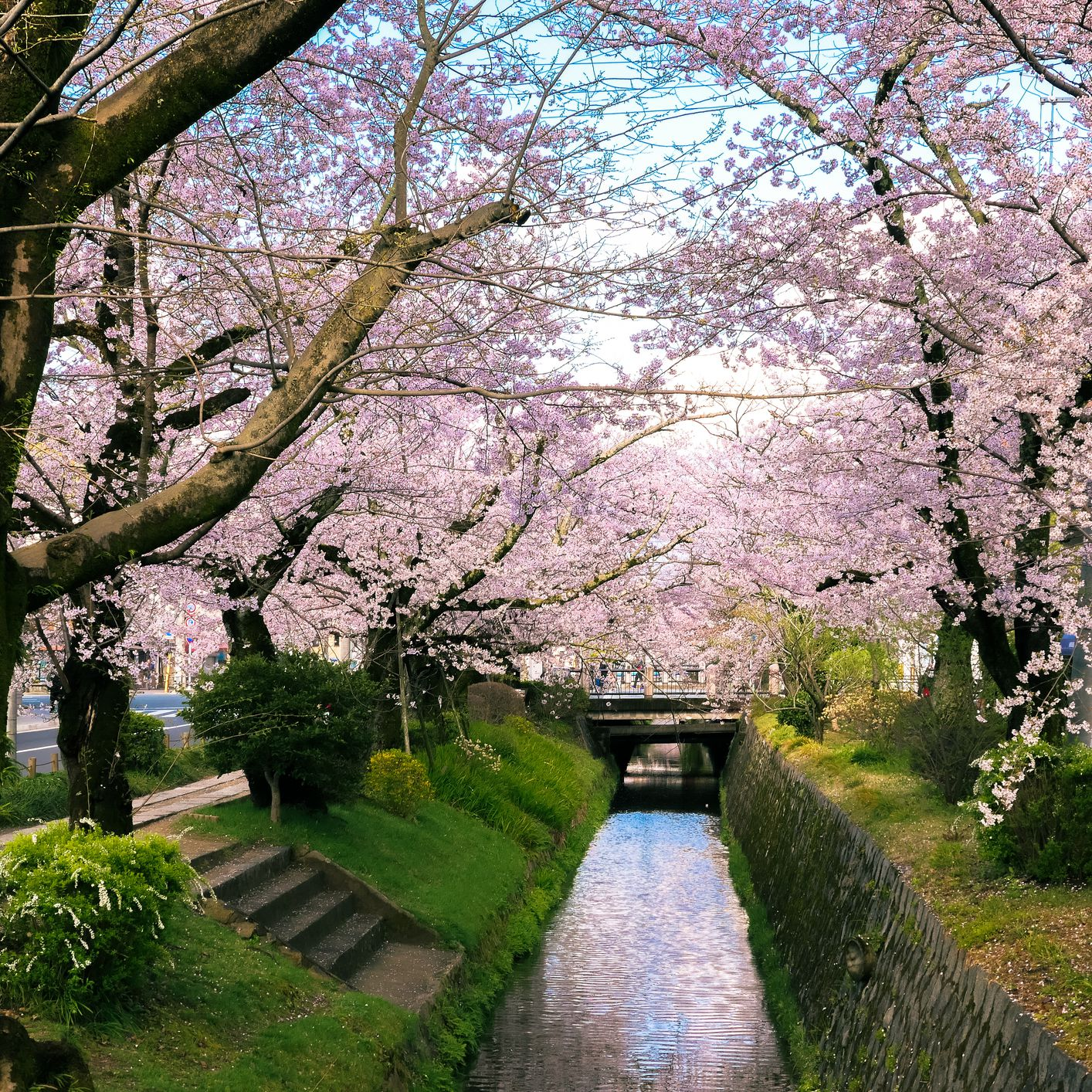 Weather in Kyoto: Climate, Seasons, and Average Monthly Temperature
