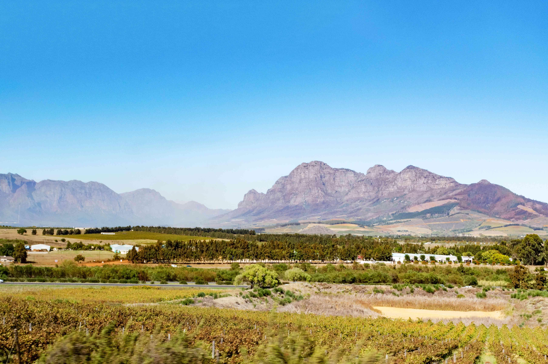 Mountains beyond a vineyard in Stellenbosch