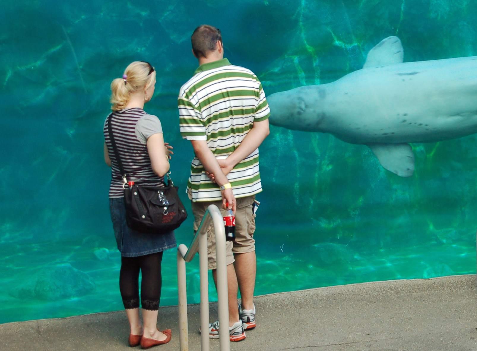 A couple enjoying the Mystic Aquarium