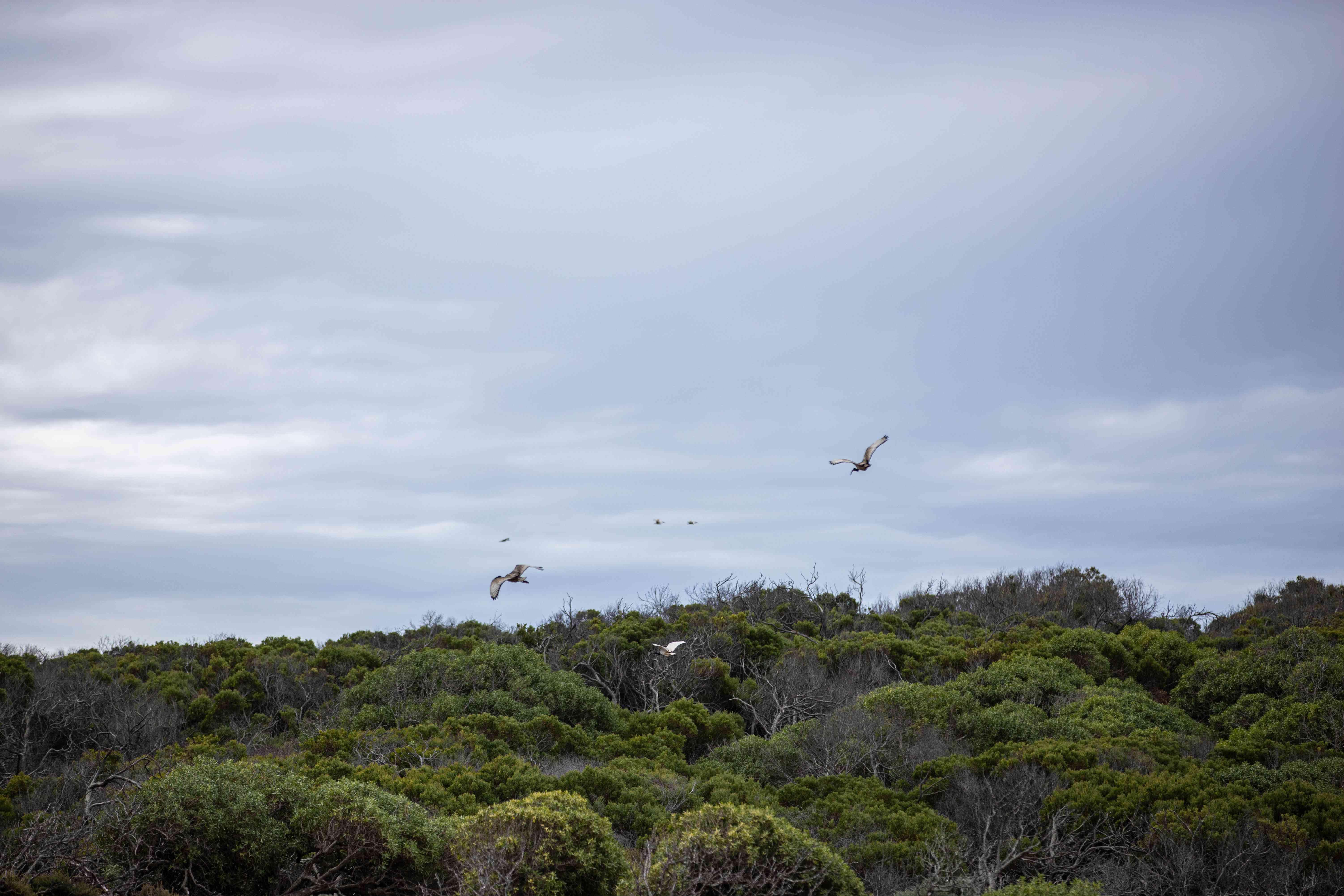 Birds flying over Robben Island