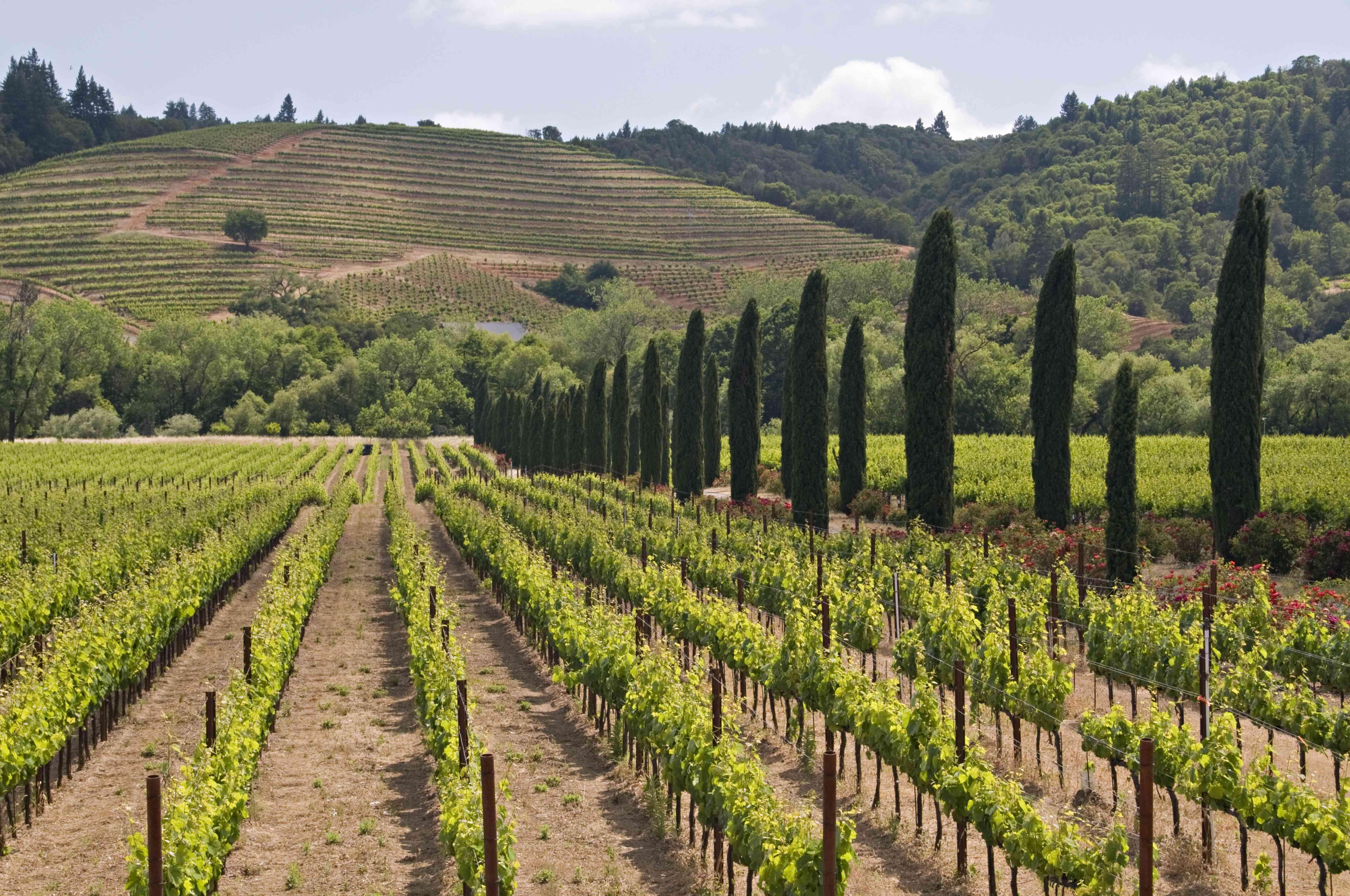 Ferrari Carano Vineyard and Winery near Healdsburg, Sonoma County, northern California, USA