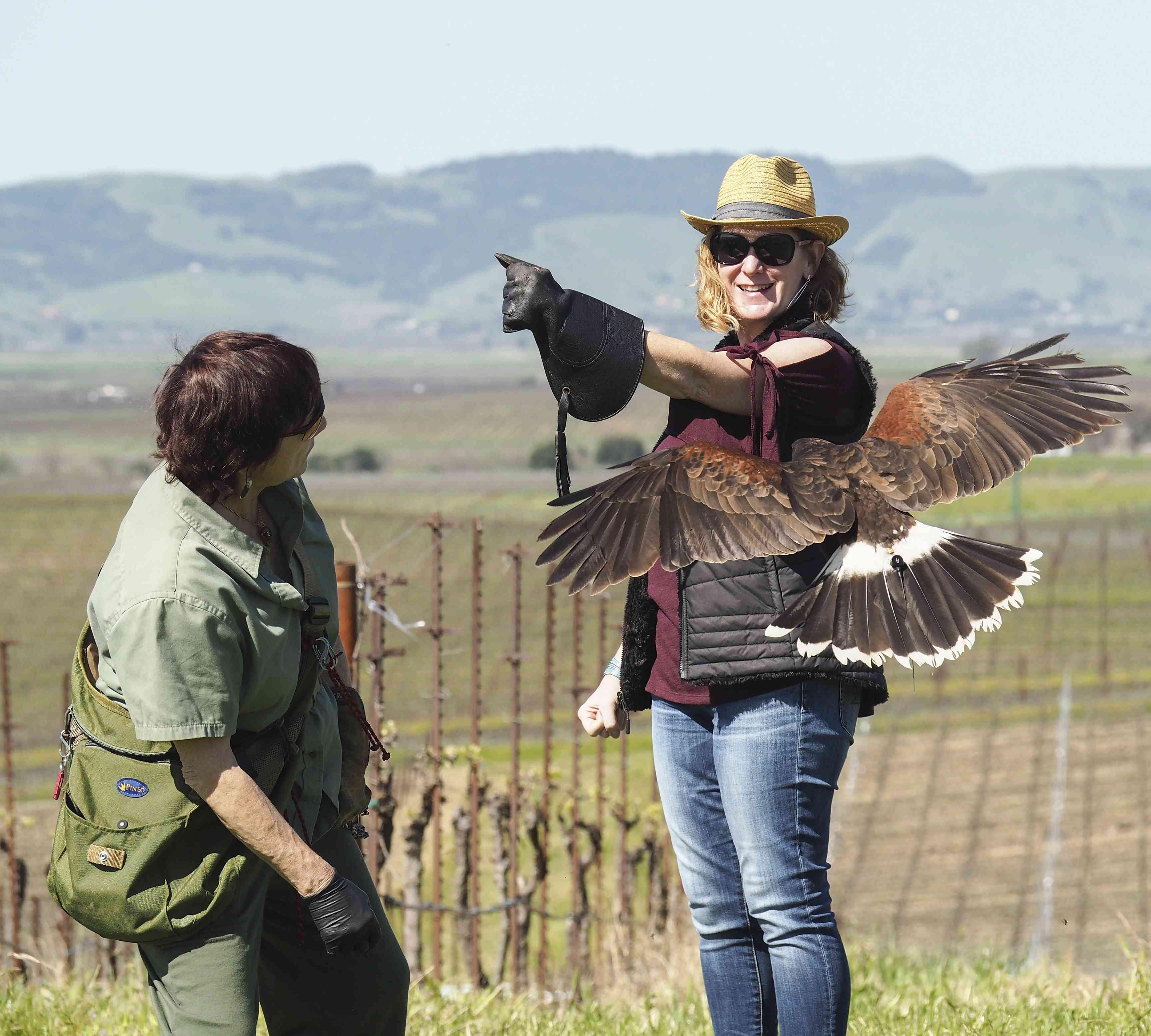 Falconry in Napa