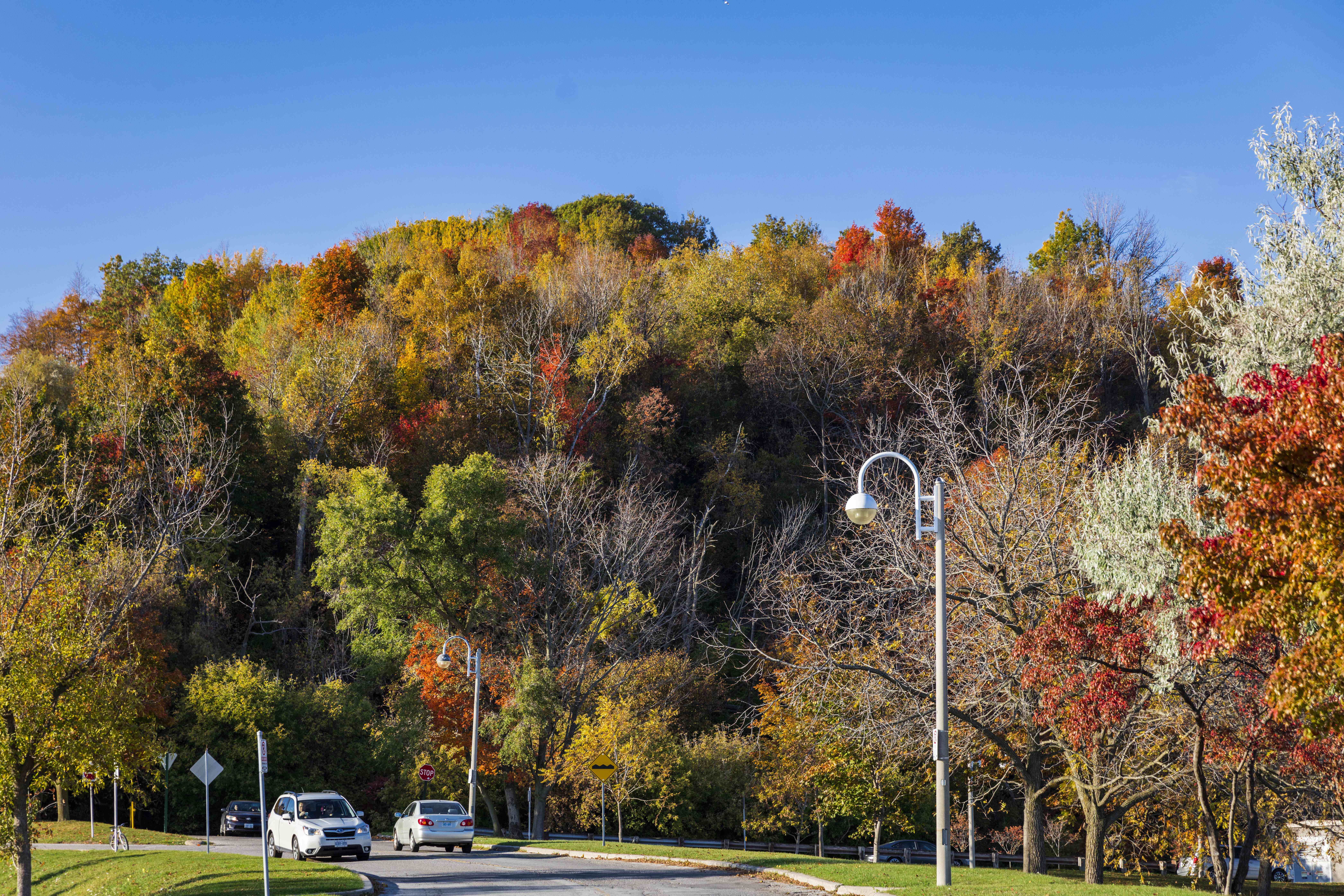 Bluffers Park Foliage in Toronto