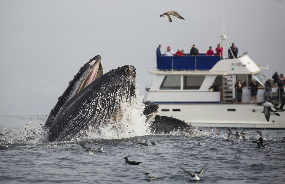 Whale Watching Near Monterey Bay, California