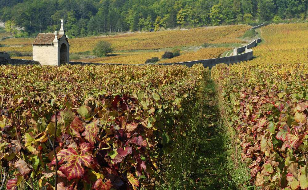 The Cote d' Or winemaking region in Burgundy, France